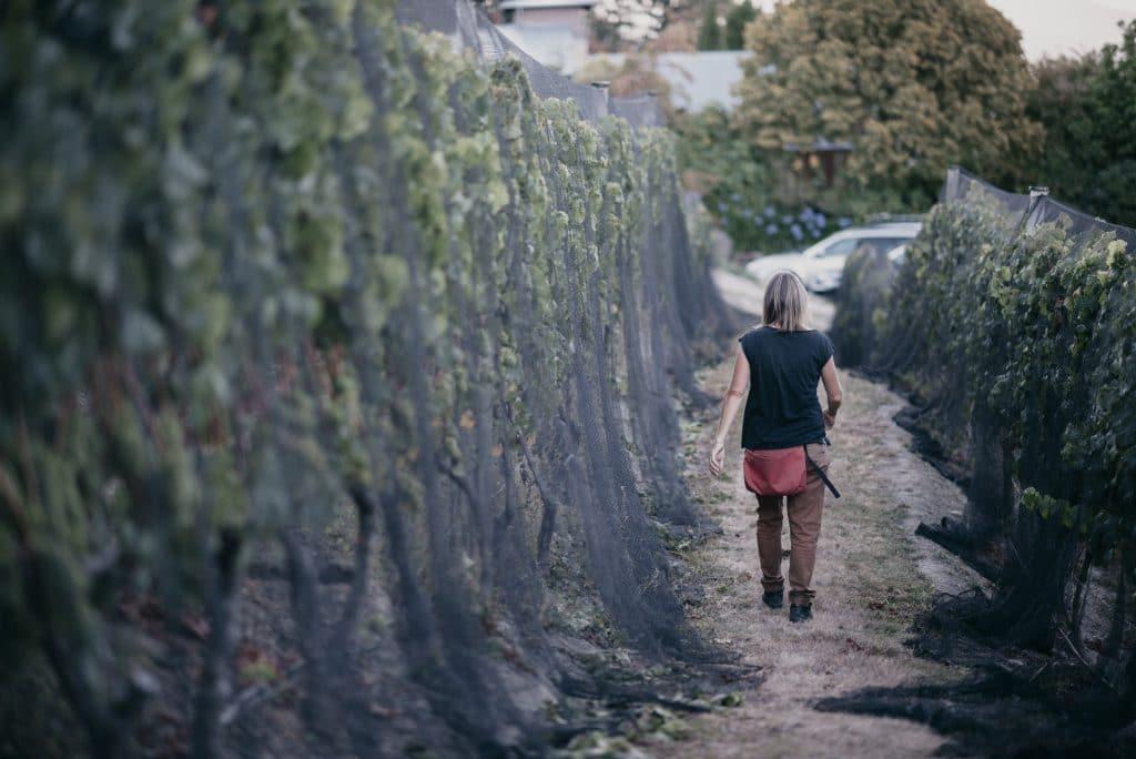 Maude Wines Vineyard, Wanaka New Zealand